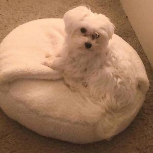 "Round Hooded Cat/Dog Bed - 18"" - Wondershop"